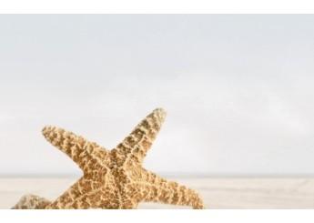 Плитка GOLDEN TILE SUMMER STONE БЕЖЕВЫЙ В41331 декор: фото - магазин Svit Keramiki